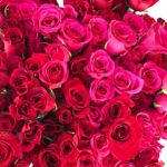 Venetian Valentine at The Village Shops on Venetian Bay, Waterfront Shopping and Dining Destination, waterfront restaurants, waterfront shopping, events schedule