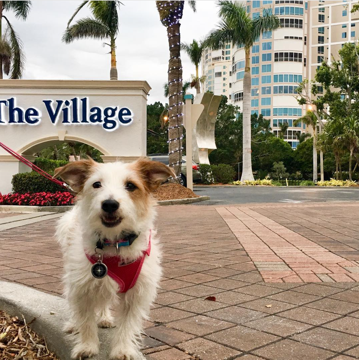 Naples, Florida shopping and dining, Dog-friendly